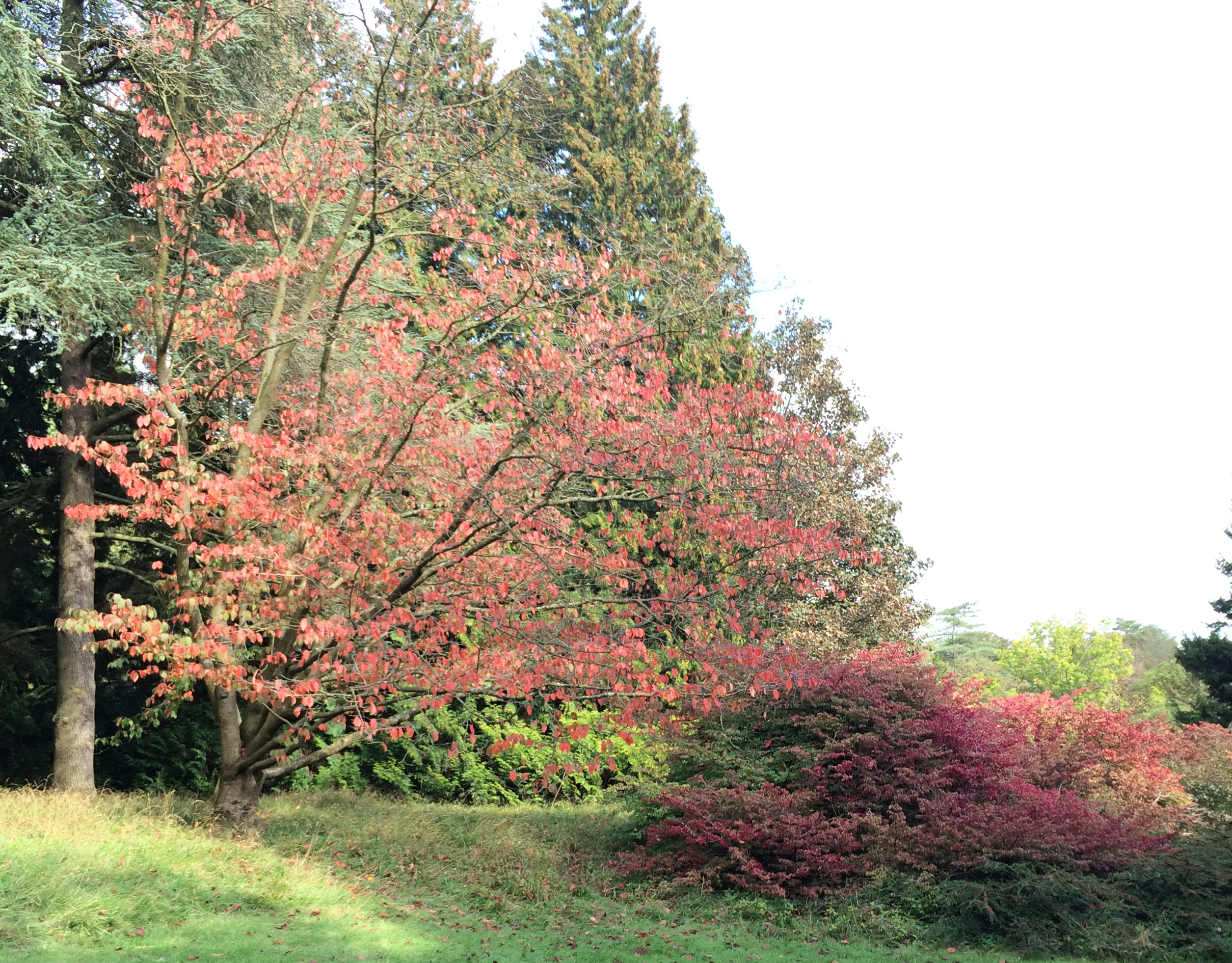 Westonbirt, The National Arboretum
